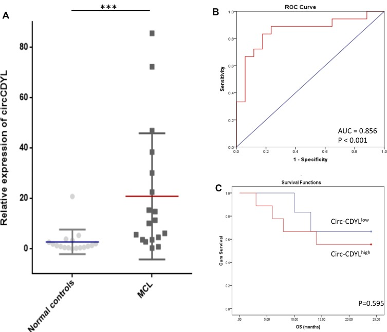 Circ-CDYL was upregulated in MCL patients. ( A ) qRT-PCR analysis showed that Circ-CDYL was upregulated in MCL patients (n = 18) compared with normal controls (n = 17). ( B ) ROC curve showed that Circ-CDYL expression could serve as a diagnostic biomarker in MCL. ( C ) Kaplan–Meier OS curves for MCL patients stratified according to circ-CDYL expression. ***p