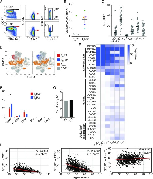CXCR3 identifies two subsets of T N cells in humans. ( A ) Representative flow cytometric analysis of CXCR3 expression on the surface of T N cells (CD45RO − CCR7 + CD27 + CD95 − ). Numbers indicate the percentage of cells in each gate. ( B ) Expression of CXCR3 relative to B2M mRNA in flow-sorted T N R3 − and T N R3 + cells ( n = 5). Each color indicates a different donor. Data are shown as mean ± SEM. n.d., not detected. ( C ) Frequency analysis of T cell subsets in PB samples from healthy individuals ( n = 26). Data are shown as mean ± SEM. T SCM (CD45RO − CCR7 + CD27 + CD95 + ); T CM , central T MEM (CD45RO + CCR7 + ); T EM , effector T MEM (CD45RO + CCR7 − ); and T TE , terminal effector T (CD45RO − CCR7 − ) cells. ( D ) tSNE map displaying the surface immunophenotypes of circulating T N R3 − , T N R3 + , and T MEM cells overlaid on the total CD8 + T cell population. Left, T N R3 − (red); right, T N R3 + (blue). Data were obtained using CyTOF. Individual markers are shown in ( E ). (E) Heatmap showing percent expression of the indicated markers among CD8 + T cell subsets identified in PB. Data were obtained using CyTOF. Subsets were defined as in (C). ( F ) Frequency analysis of T N R3 − and T N R3 + cells among total CD8 + T cells isolated from human tonsils ( n = 5), spleen ( n = 3), liver ( n = 3), gut ( n = 6), skin ( n = 5), and lungs ( n = 4). Data are shown as mean ± SEM. * p