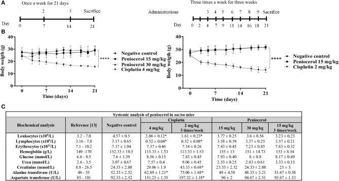 Toxicity evaluation of peniocerol in nu/nu mice. (A) Treatment scheme: Once a week for 3 weeks, the administrations were performed on days 0, 7, and 14; Three times a week for 3 weeks, administrations were performed, on days 0, 2, 4, 7, 9, 11, 14, 16, and 18. In both schemes, the animals were slaughtered on day 21. (B) Toxicity graphs: Once a week for 3 weeks, doses 30 mg/kg and 15 mg/kg of peniocerol, 4 mg/kg of cisplatin and as a negative control (sesame oil + DMSO 5%); three times a week for 3 weeks, doses 30 mg/kg and 15 mg/kg of peniocerol, 2 mg/kg of cisplatin and as a negative control the vehicle (sesame oil + 5% DMSO). The weight of the mice was monitored three times a week for 21 days. The results shown are the mean ± standard deviation of the monitoring of three mice. The significant difference **** p