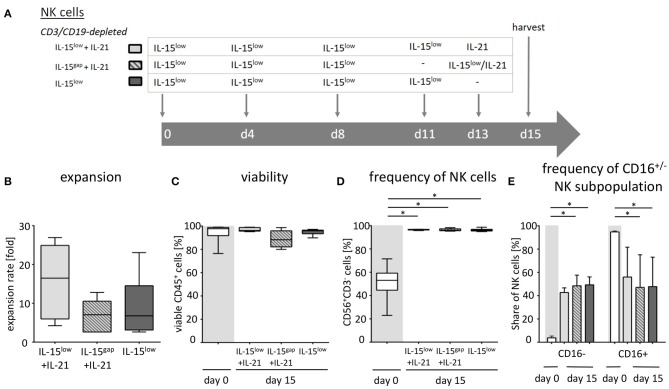 Ex vivo expansion and characterization of IL-15 and IL-15+IL-21 stimulated NK cells following CD3/CD19-depletion. (A) NK cells were purified by CD3/CD19-depletion and ex vivo stimulated with IL-15 ( ) or with a combination of IL-15 and IL-21 ( ) for 15 days. On day 11, cells were either treated with IL-15 (IL-15 low ) or the supernatant was removed and no cytokines were added (IL-15 gap ). IL-21 was added as a cytokine boost 48 h prior to harvest. (B) NK cells in the IL-15 low protocol ) expanded 6.8-fold. An IL-21 boost was able to further enhance proliferation, irrespective of gap or continuous treatment. Expansion rates reached 7.1-fold in the IL-15 gap + IL-21 protocol ( ) and 16.5-fold in the IL-15 low + IL-21 protocol ( ) (statistically not significant differences). (C) All cell products showed a high viability of median 97.5% following the purification procedure on day 0 (white symbols gray background) and remained > 80% during the expansion procedure independent of the cytokine additive. However, the gap treatment led to the lowest viability ( ). (D) Purified CD3/CD19-depleted cells on day 0 contained a median 53.1% NK cells. Upon cytokine stimulation for 15 days, NK cell purity significantly increased in CD3/CD19-depleted cell products regardless of the cytokine combination. (E) The frequency of the CD16 − NK cell subpopulation significantly increased during ex vivo stimulation within all protocols ( n = 5–6 independent experiments, (B) median fold expansion rate on day 15 compared to day 0, (C) gated on viable 7-AAD − CD45 + cells, (D) CD56 + CD3 − NK cells, (E) CD16 − NK cells. Box-and-whisker plots show median, 25th−75th percentiles, Min-Max. Bar graphs show median and interquartile range. Differences were considered significant for p