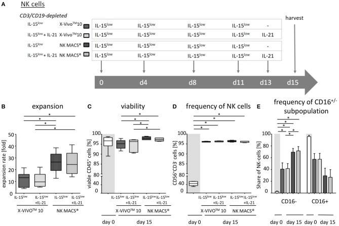 Ex vivo expansion and characterization of <t>IL-15+IL-21</t> stimulated CD3/CD19-depleted NK cells cultured in optimized NK cell medium. (A) NK cells were purified by CD3/CD19-depletion and ex vivo stimulated with solely IL-15 ( ) or with a combination of IL-15 and IL-21 ( ) for 15 days. IL-21 was added as a cytokine boost 2 days prior to harvest. NK cells were cultured in X-VIVO TM 10 medium ( ) or NK MACS® medium ( ). (B) NK cells in X-VIVO TM 10 medium expanded 13.2-fold (IL-15 low ) and 9.6-fold (IL-15 low + IL-21 ). Expansion rates were significantly higher in NK MACS® medium at 26.4-fold (IL-15 low ) and 24.4-fold (IL-15 low +IL-21 ). (C) All cell products showed a high viability with a median 96.5% following the purification procedure on day 0 (white symbols gray background) and remained > 90% during the expansion procedure, independent of the cytokine additive. Ex vivo cultivation in NK MACS® medium even led to viability > 96%. (D) Purified CD3/CD19-depleted cells on day 0 contained a median 54.4% NK cells. Upon cytokine stimulation for 15 days NK cell purity significantly increased in CD3/CD19-depleted cell products to > 95% in all protocols. (E) The frequency of the CD16 − NK cell subpopulation significantly increased during ex vivo stimulation. In total, 42.7% (IL-15 low ) and 42.6% (IL-15 low + IL-21 ) of NK cells were CD16 − after cultivation in X-VIVO TM 10 medium. Percentages of CD16 − cells were significantly higher after cultivation in NK MACS® medium: 69.5% (IL-15 low ) and 71.6% (IL-15 low + IL-21 ) ( n = 6 independent experiments, (B) median fold expansion rate day 15 compared to day 0, gated on: (C) viable 7-AAD − CD45 + cells, (D) CD56 + CD3 − NK cells, (E) CD16 − NK cells. Box-and-whisker plots show median, 25th−75th percentiles, Min-Max. Bar graphs show median and interquartile range. Differences were considered significant for p