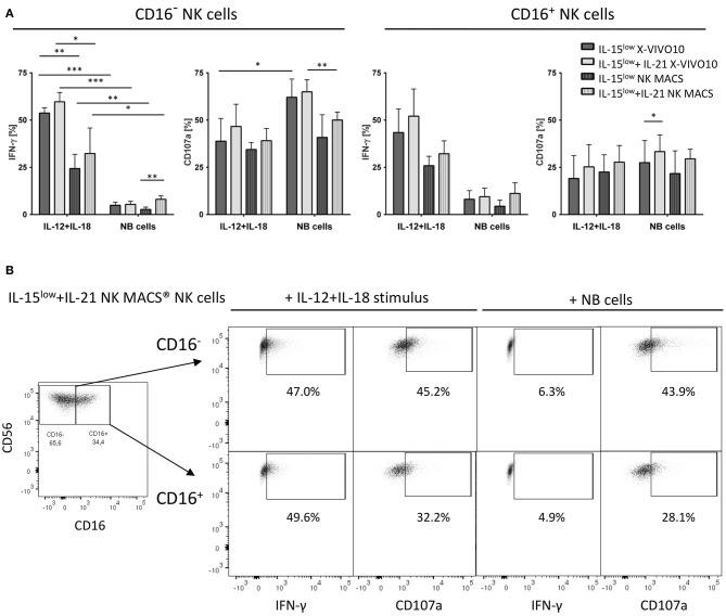 CD107a degranulation and IFN-γ production. (A) Intracellular IFN-γ expression and degranulation potential indicated by CD107a expression of cytokine stimulated NK cells cultured in X-VIVO™10 or NK MACS® media was assessed after 15 days of cultivation with the IL-15 low or IL-15 low +IL-21 stimulation protocol. Cells were either co-incubated with SK-N-AS NB target cells (E:T ratio 1:1) or stimulated with IL-12+IL-18 mimicking stimulation by dendritic cells. After the total incubation time of 4 h, cells were stained and measured by flow cytometry. IFN-γ and CD107a expression was compared to unstimulated cells in each cultivation setting used as negative control. Both NK cell subsets produced IFN-γ upon cytokine stimulation and target cell co-incubation, with higher levels after the cytokine stimulus, which was statistically significant for the CD16 − subset. Similar effects were seen in both media, except CD16 − NK cells grown in X-VIVO™10 produced significantly more IFN-γ upon IL-12+IL-18 cytokine stimulation. Target cell co-incubation and cytokine stimulation led to a high CD107a expression in both NK cell subpopulations, especially within the CD16 − NK cell population. Only small differences were seen between both cell culture media. Throughout all experiments, the additional IL-21 boost during NK cell cultivation enhanced IFN-γ and CD107a expression, which was even statistically significant in n = 2 settings (light gray vs. dark gray bars). Summary data show mean and SEM percentage of CD107a + and IFN-γ + NK cells ( n = 4 independent results). (B) FACS plots show IFN-γ and CD107a expression in both CD16 − and CD16 + NK cell subpopulations of IL-15 low +IL-21 NK cells grown 15 days in NK MACS® media. This stimulation protocol led to an outgrowth of the CD16 − NK cell subpopulation resulting in an inverse CD16 − /CD16 + distribution. The short-term stimulus of IL-12+IL-15 and target cell co-incubation, demonstrated that both NK cell subpopulations are capable of IFN