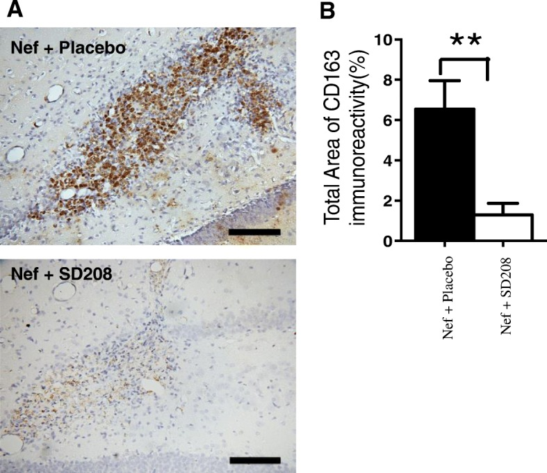 Blocking TGFβR1 with SD208 decreases CD163 expression in rats infused with astrocytes expressing Nef. a Representative tissue sections immunostained for macrophage marker, CD163. Nef+placebo (upper panel), n = 4 and Nef+SD208 (lower panel), n = 5. b Densitometric analysis was used to quantify the intensity of CD163 staining, ** p