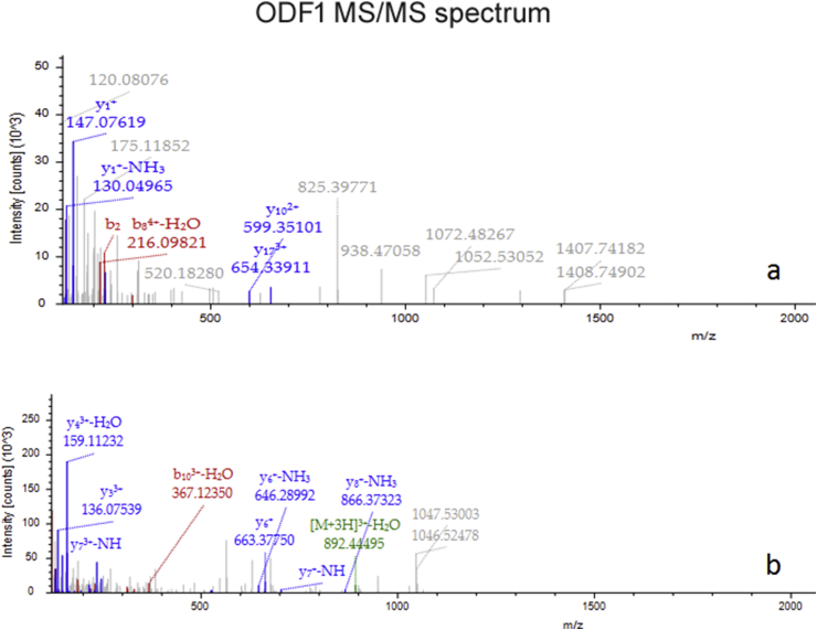 ODF1 MS/MS spectrum . I n (a) the spectrum of the peptide sequence: ILASSCCSSNILGSVNVCGFEPDQVKVRVK, C6-Carbamidomethyl (57.021146 Da), C7-Carbamidomethyl (57.02146 Da), C18-Carbamidomethyl (57.02146 Da). In (b) the spectrum of the peptide sequence EFSLPPCVDEKDVTYSYGLGSCVK, C22-Carbamidomethyl (57.021146 Da).
