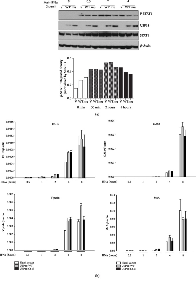 USP18 has no inhibitory effect on Jak/STAT signaling in Huh7.5 cells. Huh7.5 cells were seeded at 3 × 10 5 /ml, 2 ml per well in 6-well plates in antibiotic-free medium for 24 hours before 4 μ g blank vector <t>pcDNA-DEST53,</t> 4 μ g USP18 WT, or 4 μ g USP18 C64S was transfected into each well. 36 hours posttransfection, 100 IU/ml IFN α was added to each well. The cells were harvested at 0 min, 30 min, 2 hours, 4 hours, and 8 hours posttreatment. Total protein was extracted to detect USP18, phospho-STAT1 (Tyr701), and total STAT1 by western blot (a, upper), and phospho-STAT1 integrated density was normalized by STAT1 (a, bottom). Total RNA was extracted to detect ISG mRNAs by real-time PCR (b). V: transfected with 4 μ g blank vector pcDNA-DEST53; WT: transfected with 4 μ g USP18 WT; mu: transfected with 4 μ g USP18 C64S. Results are presented as means ± SD ( n ≥ 3).