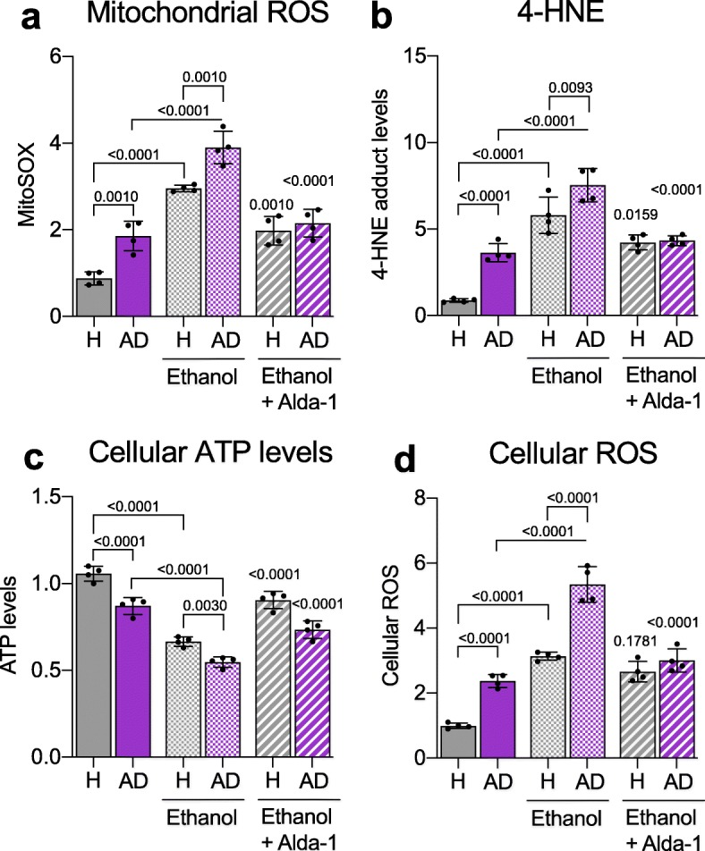 Ethanol increases metabolic dysfunction of Alzheimer's disease (AD) patient-derived fibroblasts that is rescued by ALDH2 activation. a ) Measurement of mitochondrial ROS using MitoSOX™ in 4 control (healthy subject; H)- and 4 AD patient-derived fibroblasts in the presence or absence of Alda-1 (20 μM/48 h) and ethanol (50 mM). Each data point represents an average of 3 independent biological replicates from individual lines. b ) 4-HNE levels were measured using 4-HNE Assay Kit in control (healthy subject; H)- and AD patient-derived fibroblasts in the presence or absence of Alda-1 (20 μM/48 h) and ethanol (50 mM). Each data point represents an average of 3 independent biological replicates from individual lines. c ) Cellular ATP levels were analyzed using CellTiter-Glo Luminescent Cell Viability kit in control (healthy subject; H)- and AD patient-derived fibroblasts in the presence or absence of Alda-1 (20 μM/36 h) and ethanol (50 mM). Each data point represents an average of 3 independent biological replicates from individual lines. d ) Cellular ROS production was measured using 2,7 dichloro-fluorescein diacetate (DCFDA) in control (healthy subject; H) and AD patient-derived fibroblasts in the presence or absence of Alda-1 (20 μM/48 h) and ethanol (50 mM). Each data point represents an average of 3 independent biological replicates from individual lines. Data information: Mean, standard deviation, and p-values are shown. Results are presented as percent/fold of control. n = 3 independent biological replicates; probability by one-way ANOVA (with Holm-Sidak post hoc test)