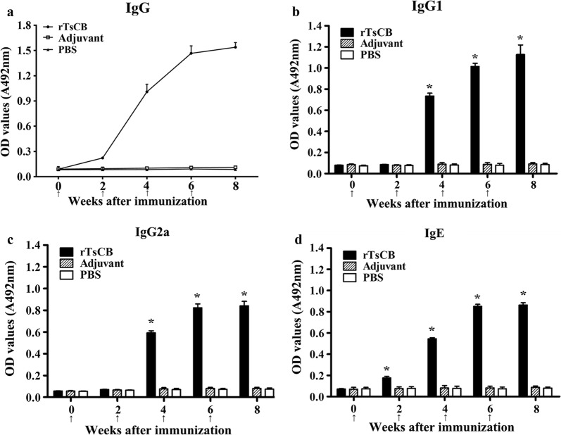 Specific antibody response in mice immunized with rTsCB. a Specific total IgG in mice immunized with rTsCB or control mice (adjuvant and PBS) at different time intervals following vaccination. Specific IgG1 ( b ) and IgG2a ( c ) subclass responses against rTsCB at different time points following vaccination. d Specific IgE level in vaccinated mice. The OD values are shown as the mean ± SD of antibody levels ( n = 10). Vaccination time point is indicated with an arrow. * P
