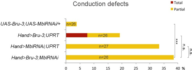 Effect of simultaneous cardiac attenuation of Mbl and overexpression of Bru-3 on conduction defects. Barplot graph showing percentage of flies with conduction defects. Note a moderate additive effect of simultaneous attenuation of Mbl and overexpression of Bru-3. Number of fly hearts tested (n) is indicated and statistical significance (Fisher's exact test) denoted by ns (p > 0.05) and *** (p