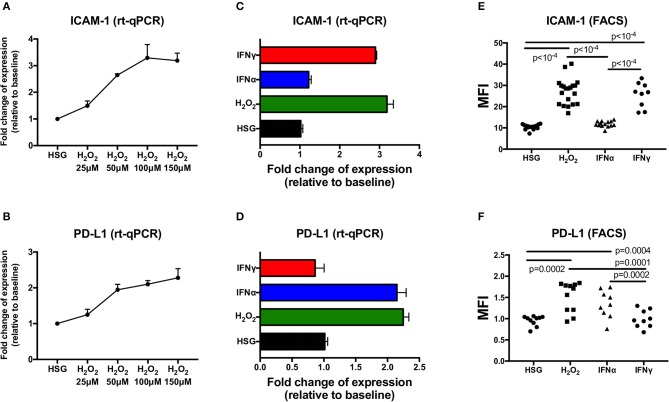 Expression of ICAM-1 and PD-L1 measured by real-time PCR and flow cytometry in the human salivary gland (HSG) cell line after 48 h of treatment with H 2 O 2 , IFNα, and IFNγ, respectively. (A,B) H 2 O 2 dose effect on ICAM-1 and PD-L1 mRA expression ( n = 3). (C,D) HSG (no treatment), H 2 O 2 (150 μM), IFNα, and IFNγ effect on ICAM-1 and PD-L1 mRA expression ( n = 3). (E,F) No treatment ( n = 17 and 10, respectively), H 2 O 2 ( n = 20 and 11), IFNα ( n = 14 and 9), and IFNγ ( n = 9 both) effect on cell surface ICAM-1 and PD-L1 expression as evaluated by flow cytometry. MFI, mean fluorescence intensity; ICAM-1, intracellular adhesion molecule-1; PD-L1, programmed death ligand 1.