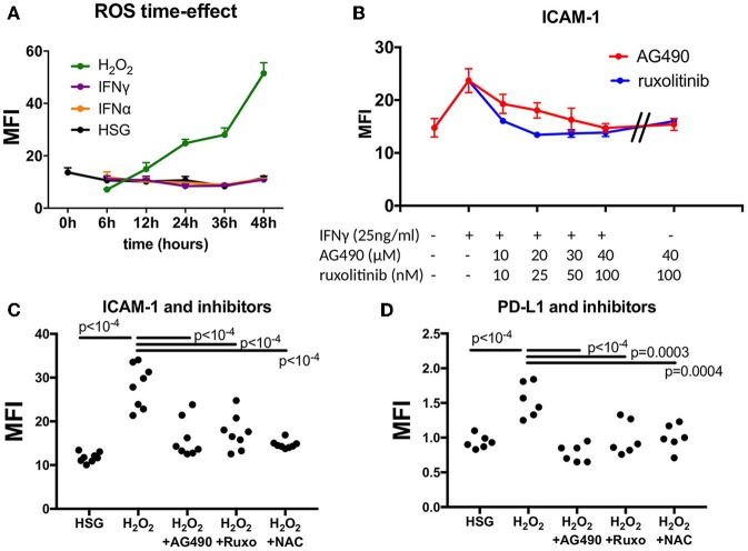 Effect of JAK inhibitors and NAC on ICAM-1 and PD-L1 induction mediated by IFNγ and H 2 O 2 . (A) Measurement of ROS in a time effect by flow cytometry after treatment with H 2 O 2 , IFNα, and IFNγ ( n = 3). (B) Dose effect of the JAK inhibitors AG490 and ruxotinib to reverse ICAM-1 induction mediated by IFNγ. (C) AG490, ruxolitinib, and NAC reverse H 2 O 2 -mediated induction of ICAM-1 ( n = 8). (D) AG490, ruxolitinib, and NAC reverse H 2 O 2 -mediated induction of PD-L1 ( n = 6). ICAM-1, intracellular adhesion molecule-1; NAC, N-acetylcysteine; PD-L1, programmed death ligand 1; ROS, reactive oxygen species; H 2 O 2 , hydrogen peroxide.