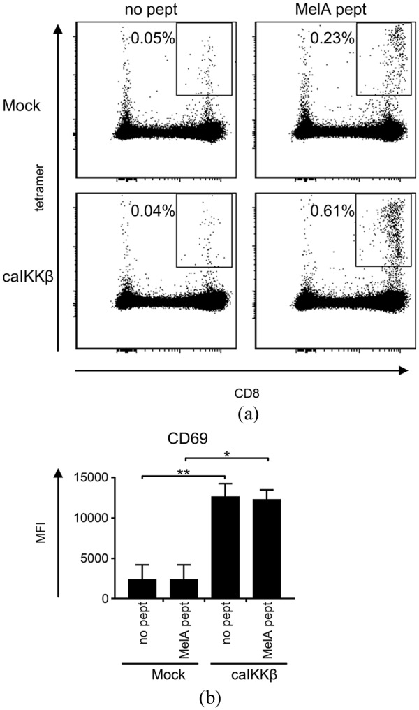 Stimulation of peripheral blood mononuclear cells (PBMCs) with caIKKβ-DCs leads to activation of both NK cells and CD8 + T cells. Cytokine-matured dendritic cells (DCs) were electroporated either with caIKKβ-RNA or, as a control, were mock electroporated. Transfected DCs were then either loaded with a CD8 + T-cell epitope from the melanoma antigen MelanA (MelA pept) or were left untreated (no pept). These DCs were co-cultured with fresh autologous PMBCs at a ratio of 1:10 (final concentrations: 2 × 10 5 DCs/ml and 2 × 10 6 PBMC/ml) and incubated for 1 week. (a) MelanA-specific CD8 + T cells were measured by peptide-HLA-tetramer staining. To identify CD8 + T cells the gating strategy shown in Supplemental Figure S8A – E was used. The percentage of MelanA-specific CD8 + T cells out of all CD8 + T cells was calculated. Dot plots from a representative donor out of four individual donors is shown; for all original data, see Supplemental Table S7 . (b) The expression of CD69 on NK cells (using the gating strategy shown in Supplemental Figure S8A – D to identify NK cells) was determined for each condition via flow cytometry. The average MFI of four different donors with the SEM is shown; for original data, see Supplemental Table S8 . p values were calculated to the respective mock condition with paired Student's t test. ** p ⩽ 0.01, * p ⩽ 0.05.