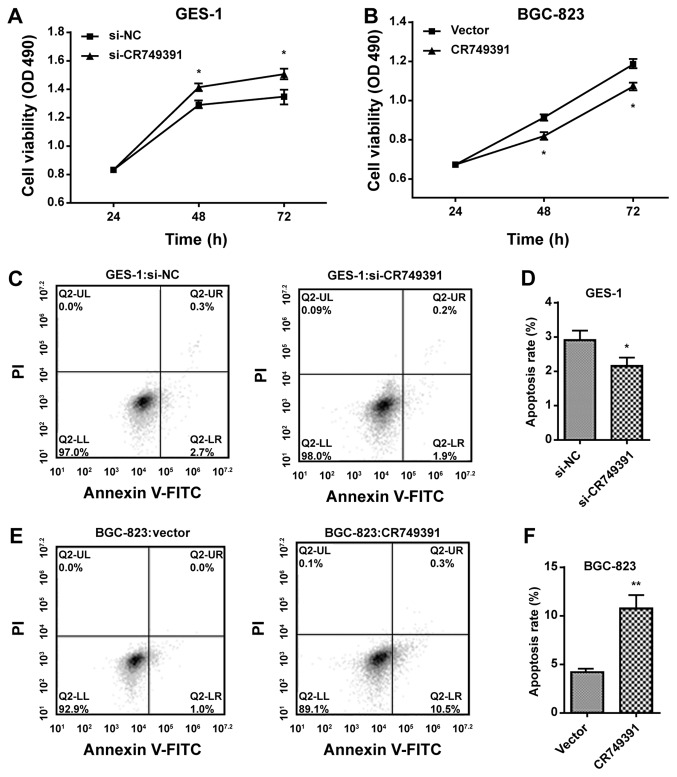 CR749391 expression in gastric cancer cells and its effect on cell proliferation in vitro . (A and B) MTT assays were performed to determine the proliferation of (A) si-CR749391-transfected GES-1 cells or (B) pcDNA3.1/CR749391-transfected BGC-823 cells. (C-F) The apoptotic rates of (C and D) GES-1 cells transfected with si-CR749391 and (E and F) BGC-823 cells transfected with pcDNA3.1/CR749391 vector were detected by flow cytometry. Values are expressed as the mean ± standard deviation from three independent experiments. *P