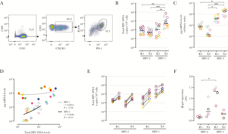 In vitro infection of tonsillar follicular helper T cells (Tfh) by human immunodeficiency virus (HIV)-2. (A) Illustrative dot plots of the sorting strategy, based on CXCR5, PD-1, and ICOS expression, used to isolate Tfh from human tonsillar mononuclear cells enriched for CD4 T cells by magnetic isolation. (B) Total HIV deoxyribonucleic acid (DNA) and (C) gag messenger ribonucleic acid (mRNA) quantified after 24-hour infection with R5- or X4-tropic HIV-2 or HIV-1 primary isolates. (D) Correlation of total HIV DNA and viral gag mRNA levels. (E) Comparison of total viral DNA at 24 hours postinfection and after 48-hour T-cell receptor (TCR)-mediated stimulation with α-CD3i/α-CD28s. (F) Infectivity of culture supernatants harvested after 48-hour TCR stimulation of HIV-infected Tfh assessed using a TZM-bl reporter cell line and chlorophenolred-β- d -galactopyranoside colorimetric assay (CPRG). Each dot represents 1 independent experiment, and each color refers to a different tonsil donor. * P