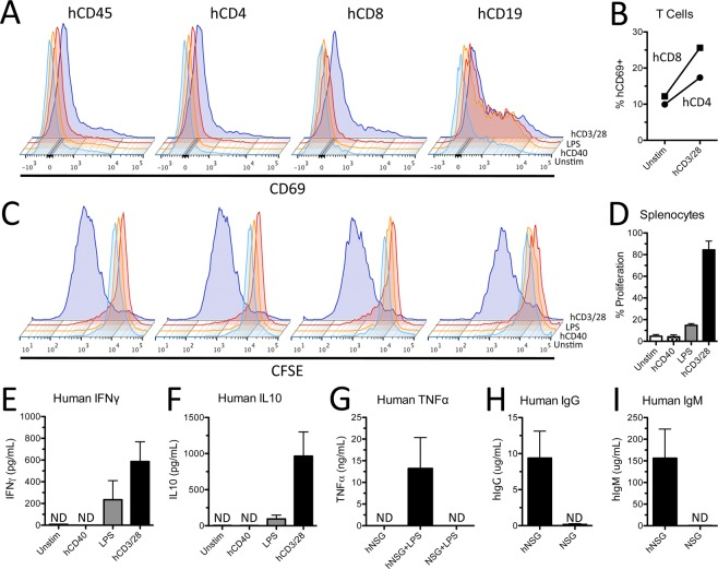 Human innate and adaptive immune cells from hNSG mice are functional and respond to cell-specific stimulation. ( A ) Human splenocytes upregulate cell surface expression of activation marker CD69 48 hours after stimulation with human CD3/28 antibody and rhIL2. ( B ) Proportion of hCD4 + and hCD8 + T cells expressing CD69 48 hours after stimulation by hCD3/28 and rhIL2. ( C ) Decrease in CFSE staining demonstrating robust proliferation of human splenocytes stimulated with hCD3/28 and rhIL2. ( D ) Proportion of proliferating splenocytes 96 hours after cell specific stimulation. ( E , F ) Quantification of human interferon gamma (IFNγ) and <t>IL10</t> in culture supernatants after 96 hours of cell specific stimulation. ( G ) Human TNFα quantification in blood serum 1 hour after in vivo injection with 3 mg/kg lipopolysaccharide (LPS). Human IgG ( H ) and IgM ( I ) from blood serum in hNSG mice. Note the absence of human cytokines and antibodies in blood serum of non-engrafted NSG mice treated with LPS, demonstrating species specificity of ELISAs. ND = not detected. Data average ± SEM; n = 2 biological replicates in ( B , D ) n = 4 biological replicates in ( E , F ) n = 3 mice per group in ( G , H ) n = 3 NSG and n = 6 hNSG mice in ( I , J ).
