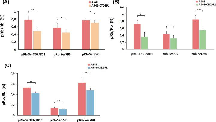 Ratio of phosphorylated Rb (pRb) after transfecting A549 cells with plasmids encoding either CTDSP1 (A), CTDSP2 (B), or CTDSPL (C) In all three cases, the ratio of phosphorylated Rb protein is decreased after transfection. pRb/Rb, relative amount of pRb normalized to the total Rb protein. Intact A549 were compared with the slowest growing clones of A549 stably transfected with pT2/HB-СTDSP1, 2 or L. A minimum of two independent ELISA experiments were performed. The data represent the means of 8 wells ± SD. * P ≤0.05; ** P ≤0.01; *** P ≤0.001 (Mann–Whitney U-test).