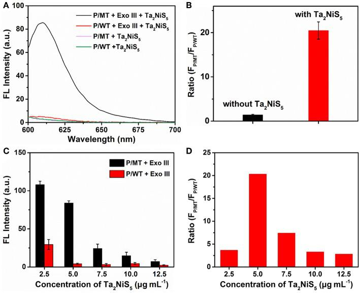 (A) Fluorescence spectra of P/MT + Exo III + Ta 2 NiS 5 (black), P/WT + Exo III + Ta 2 NiS 5 (red), P/MT + Ta 2 NiS 5 (pink), and P/WT + Ta 2 NiS 5 (green). (B) The fluorescence intensity ratio (FP/MT/FP/WT) at 610 nm for P/MT + Exo III and P/WT + Exo III in the absence (black) and presence (red) of Ta 2 NiS 5 nanosheets. (C) Fluorescence intensity of P/MT + Exo III (black) and P/WT + Exo III (red) in the presence of Ta 2 NiS 5 nanosheets with different final concentrations of 2.5, 5.0, 7.5, 10.0, and 12.5 μg ml −1 (P = 1 μM; MT = 100 nM; WT = 100 nM; Exo III = 0.25 U μl −1 ). (D) The fluorescence intensity ratio (FP/MT/FP/WT) at 610 nm in the presence of Ta2NiS5 nanosheets with different final concentrations of 2.5, 5.0, 7.5, 10.0, and 12.5 μg ml −1 (P = 1 μM; MT = 100 nM; WT = 100 nM; Exo III = 0.25 U μl −1) . The excitation wavelength is 590 nm.