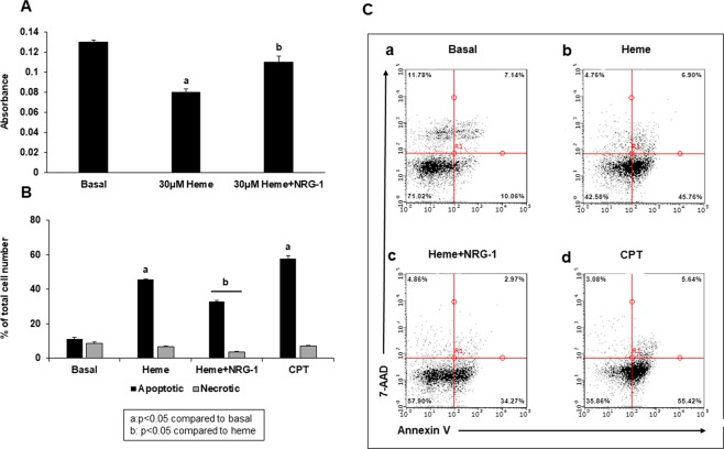 Heme-induced apoptosis of iPSCs is diminished by NRG-1. iPSCs were treated with heme for 8 hours, and NRG-1 was then added for 18 hours. Cell viability was determined using the CCK-8 assay ( A ), while the apoptotic/necrotic cell number was assessed using flow cytometry analysis ( B , C ). ( A ) Cell viability decreased significantly when iPSCs were treated with heme. NRG-1 reduced the effects of heme. ( B ) The number of apoptotic cells increased with heme compared to basal conditions. The addition of NRG-1 to heme treatment decreased not only the number of apoptotic but also the number of necrotic cells. CPT was used as a positive control for apoptosis. The data shown are the mean values + standard error (SE) (n = 3 experiments) (a: p