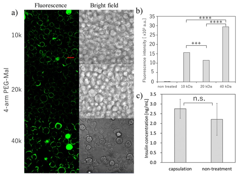 Microencapsulation of beta-TC-6 cells. with different 4-arm PEG-Mal. ( a ) Confocal microscopic images of microencapsulation of beta-TC-6 cells with 4-arm PEG (10k, 20k, and 40k)-Mal. FITC-BSA-SH was used for the visualization of the polymer membrane. Scale bar: 20 µm. ( b ) Quantitative analysis of polymer membranes on beta-TC-6 cells using flow cytometry. Error bars indicate standard deviation; n = 3. ( c ) Glucose-responsive insulin secretion from microencapsulated and non-treated beta-TC-6 cells measured by ELISA. Error bars indicate standard deviation; n = 3. *** = p