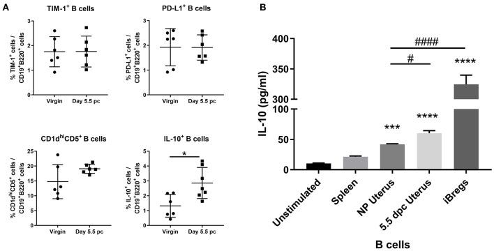An expanded pool of <t>IL-10</t> + B cells are present in the uterus after implantation. (A) Known regulatory B cell subsets were analyzed from B cells collected from non-pregnant and pregnant uteri ( n = 6–7, unpaired t -test). (B) IL-10 production by stimulated populations of purified B cells obtained from the spleen, virgin uterus, day 5.5 pc uterus, or in vitro induced Bregs was assessed by <t>ELISA.</t> Data represent pooled supernatants of duplicate wells from three independent experiments. Data is presented as mean ± SEM and compared by one-way ANOVA, followed by Dunnett's post-hoc multiple comparisons test against unstimulated control. * p ≤ 0.05, *** p ≤ 0.001, **** p ≤ 0.0001. Additional Dunnett's analysis assessed against non-pregnant virgin uterus reveal a significant increase in IL-10 produced by day 5.5 pc uterine B cells and iBregs ( # p ≤ 0.05, #### p ≤ 0.0001).