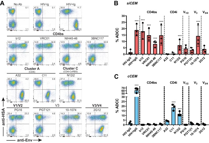 Binding to cCEM and siCEM and ADCC activity mediated by anti-Env monoclonal and polyclonal Abs. siCEM cells and cCEM target cells were separately labeled with CFSE, opsonized with 15 μg/ml of each anti-Env Abs used as described for Fig. 3 . (A) Opsonized siCEM cells and cCEM cells were combined 1:1 and stained with anti-HSA ( y axis) to differentiate siCEM cells (CFSE + HSA + ) from cCEM cells (CFSE + HSA − ), and anti-human IgG Fc-specific secondary Ab was used to detect anti-Env binding ( x axis). The primary anti-Env Ab used for staining is identified above each density plot. Frequencies of HSA + and/or Env + cells are indicated in each quadrant. (B and C) Opsonized siCEM cells and cCEM cells were incubated side by side with isolated NK effector cells for 1 h. The y axes show ADCC activity (% ADCC) mediated by each of the anti-Env-specific MAbs (identified below each bar) measured as the frequencies of AnV + siCEM cells (B) and cCEM cells (C). Data represent averages ± SD of results from three independent experiments. Each dot represents a single NK cell donor. Significance was determined by comparing the percentages of ADCC between the anti-Env Abs used with HIV − IgG (*, P