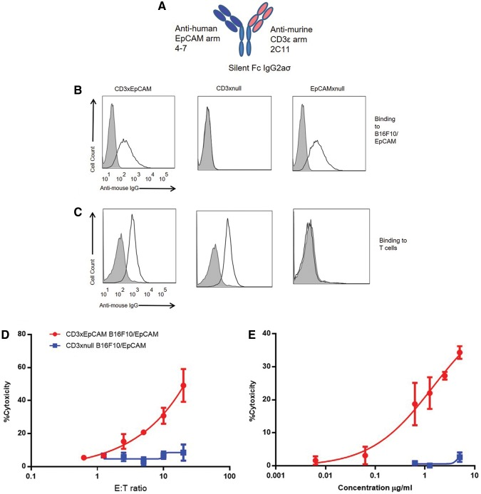 CD3xEpCAM murine bispecific antibody binds mouse CD3 and human EpCAM and redirected OT1 T cells to kill human EpCAM expressing B16F10. (A) CD3xEpCAM mouse bispecific antibody had anti-murine CD3ɛ arm (clone 2C11) and anti-human EpCAM arm (clones 4–7). ( 15 ) (B) B16F10/EpCAM cells were incubated with 10 μg/mL of either CD3xEpCAM or CD3xnull and EpCAMxnull controls. Antibody binding to human EpCAM on B16F10 was detected using anti-mouse IgG APC secondary antibody. Secondary antibody stained cells only (gray-filled histograms) were used as a negative control, and open histograms denotes staining with CD3xEpCAM bispecific antibody of either B16F10/EpCAM (B) or OT1 T cells (C) . (D, E) The CD3xEpCAM antibody redirected OT1 T cells isolated from spleen and lymph nodes of OT1 mice and pre-activated with SIINFEKL peptide loaded C57BL/6 mature DC for 48–72 hours as demonstrated by BADTA/Eu-based CTL. (D) E:T ratio was varied in the presence of 10 μg/mL of either CD3xEpCAM (red circles) or CD3xnull negative control (blue squares). (E) The concentration of either CD3xEpCAM (red circles) or CD3xnull (blue circles) was varied from 0.006 to 5 μg/mL, and the E:T is kept constant at 10:1. The data are representative of three individual experiments. APC, allophycocyanin; CTL, cytotoxic T lymphocytes; DC, dendritic cell; EpCAM, epithelial cell adhesion molecule; IgG, immunoglobulin G.