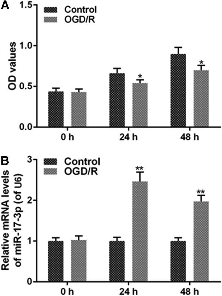 OGD/R decreases H9C2 cell viability and increases the expression of miR-17-3p. OGD/R was performed by means of free FBS and no-glucose Dulbecco's modified Eagle's medium (DMEM) in 5% CO 2 , 1% O 2 , and 37°C for 6 hours, then higher-glucose DMEM, 10% FBS and 1% penicillin-streptomycin in 5% CO 2 , 95% air, and 37°C for 1 hour. H9C2 cells were seeded in 96-well plate at 4 × 10 3 cells/hole for 24 hours. Then, H9C2 cells were treated with OGD/R for 24 hours or 48 hours. (A) Cell viability was detected by MTT assay. (B) The expression level of miR-17-3p was analyzed via qRT-PCR assays. Values were presented by mean ± SD, and the relationship between the two groups was analyzed by ANOVA with Tukey's test (* vs. Control group, * p
