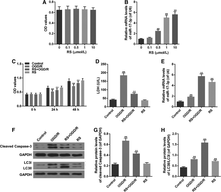 RS reduces OGD/R injury in H9C2 cell. H9C2 cells were seeded in <t>96-well</t> plate at 4 × 10 3 cells/hole. After 24 hours, the cells were treated with different concentrations of RS for 24 hours. RS + OGD/R group was performed as follows: H9C2 cells were incubated by 1 μM RS for 3 hours. Then, the cells were performed by OGD/R and normal circumstance for 21 hours after the cells were washed by PBS. (A, C) MTT assay detected cell viability. (B, E) miR-17-3p level was evaluated by qRT-PCR assays. (D) LDH leakage was assessed by colorimetric assays. (F-H) The levels of LC3II/LC3I and cleaved caspase-3 were measured by western blot. Values were presented by mean ± SD, and the relationship between two groups was analyzed by ANOVA with Tukey's test (* vs. Control group, ^ vs. OGD/R group; **^^ p