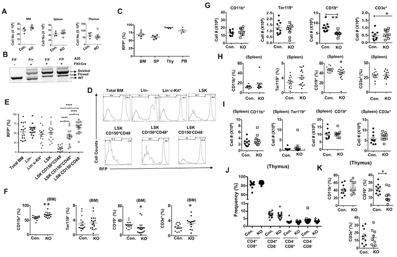 A20 deficiency in MPPs leads to modest changes in hematopoiesis. (A) Cellularity of BM (two femurs and two tibias), thymus and spleen of 8 weeks old A20 F/F Flt3 cre/+ and control mice (n = 4–6). (B) Genotyping PCR for Tnfaip3 gene from BM of A20F/FFlt3+/+, A20F/+Flt3cre/+ and A20F/FFlt3cre/+ mice. (C) Frequencies of RFP+ cells in the indicated hematopoietic organs from A20F/FFlt3cre/+ RosaRFP mice. (D) Representative histograms indicating frequencies of RFP+ cells in the specified hematopoietic subsets from A20F/FFlt3cre/+ RosaRFP mice. (E) Cumulative data indicating frequencies of RFP+ cells in hematopoietic subsets of A20F/FFlt3cre/+ RosaRFP mice (n = 15–16). (F) Frequencies of CD11b+, Ter119+, CD19+ and CD3e+, cells in the BM of A20F/FFlt3cre/+ and control mice (n = 13–18). (G) Absolute number of myeloid cells (CD11b+, 1st panel), erythroid cells (Ter119+, 2nd panel), B cells (CD19+, 3rd panel) and T cells (CD3+, 4th panel) from the BM of 8 weeks old A20F/FFlt3cre/+ and control mice (n = 9–10). (H) Frequencies of CD11b+, Ter119+, CD19+ and CD3e+, cells in the Spleen of A20F/FFlt3cre/+ and control mice (n = 12–17). (I) Absolute number of myeloid cells (CD11b+, 1st panel), erythroid cells (Ter119+, 2nd panel), B cells (CD19+, 3rd panel) and T cells (CD3+, 4th panel) from the spleen of 8 weeks old A20F/FFlt3cre/+ and control mice (n = 9–10). (J) Frequencies of CD4+CD8+, CD4+CD8−, CD4−CD8+ and CD4−CD8− in the thymus of A20F/FFlt3cre/+ and control mice (n = 11–15). (K) Frequencies of myeloid cells (CD11b+, 1st panel), B cells (CD19+, 2nd panel) and T cells (CD3+, 3rd panel) from the peripheral blood of 8 weeks old A20F/FFlt3cre/+ and control mice (n = 9–10). All data represent mean ± SEM. Two-tailed student's t -tests were used to assess statistical significance (*P
