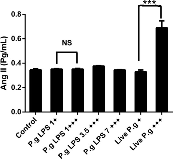 Angiotensin II levels are determined in the HCAEC cell culture supernatant stimulated to single (+) or repetitive (+++) exposures of P. gingivalis -LPS or live- P . gingivalis by the ELISA kit. The results are expressed as the means ± SEM (n=3) with a statistical significance represented as (*)p
