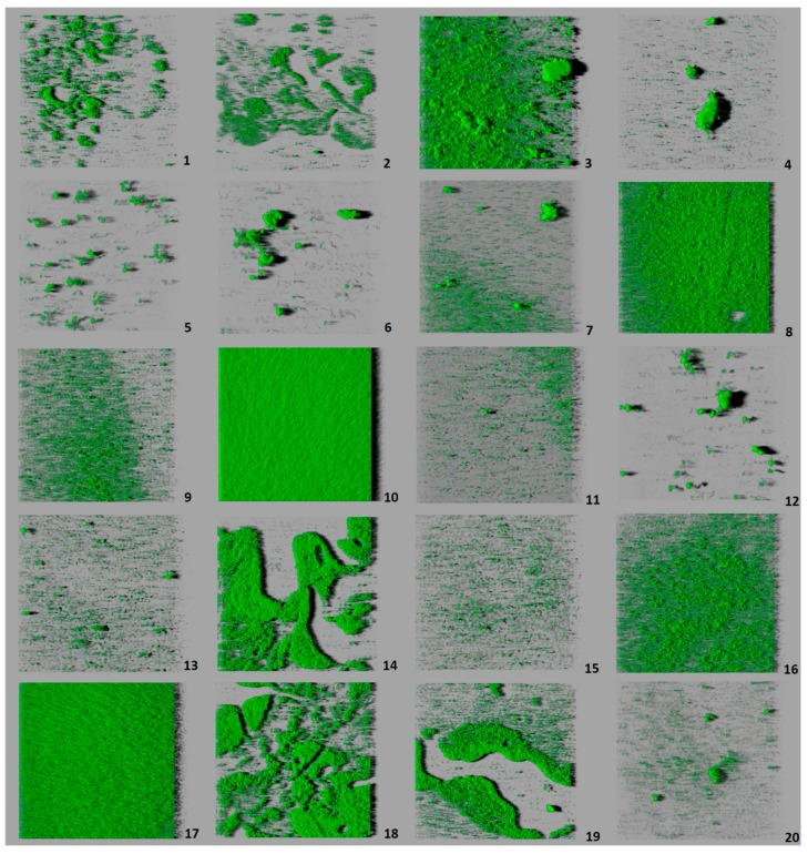 Three-dimensional projections of structures of biofilms obtained from one-micron optical sections on the z -axis acquired through confocal laser scanning microscopy. These images represent an overhead view of the biofilms formed by 20 strains of Listeria monocytogenes , with virtual projection of shadows to the right. Each square represented had length of side of 119 μm. Strains: 1 (serotype 1/2a), 2 (1/2a), 3 (1/2b), 4 (1/2b), 5 (1/2c), 6 (1/2c), 7 (3a), 8 (3b), 9 (3b), 10 (3c), 11 (3c), 12 (4a), 13 (4a), 14 (4b), 15 (4b), 16 (4b), 17 (4b), 18 (4c), 19 (4d), 20 (4d).