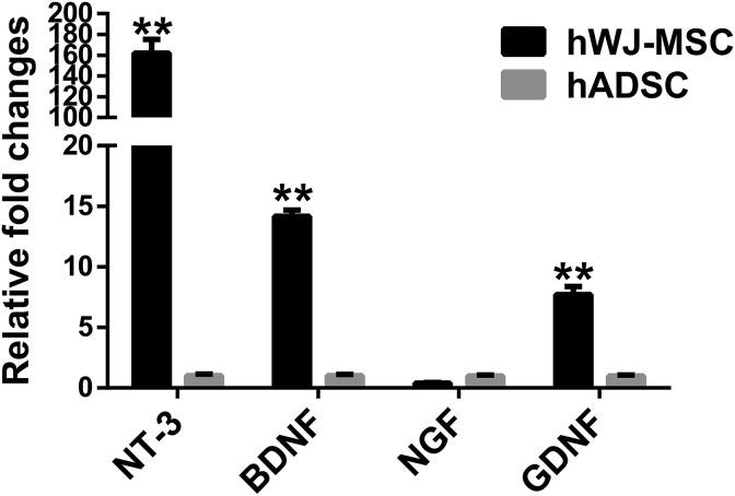 Quantification of hWJ-MSC-derived neurotrophic factor expression. The expression of mRNA for neurotrophic factors such as neurotrophic factor 3 (NT-3), brain-derived neurotrophic factor (BDNF), neurotrophic growth factor (NGF), and glial-derived neurotrophic factor (GDNF) in hWJ-MSC and hADSC was quantified using qPCR. The neurotrophic factor expression was normalized to that of GAPDH. The relative fold changes (mean ± SD) of hWJ-MSC and hADSC groups were 161.9 ± 13.3 and 1.0 ± 0.1, respectively, for NT-3 expression. The relative fold changes (mean ± SD) of hWJ-MSC and hADSC groups were 14.2 ± 0.5 and 1.0 ± 0.1, respectively, for BDNF expression. The relative fold changes (mean ± SD) of hWJ-MSC and hADSC groups were 0.4 ± 0.1 and 1.0 ± 0.1, respectively, for NGF expression. The relative fold changes (mean ± SD) of hWJ-MSC and hADSC groups were 7.7 ± 0.7 and 1.0 ± 0.1, respectively, for GDNF expression. The difference between mean ± SD of the hWJ-MSC and hADSC groups was significant ( p