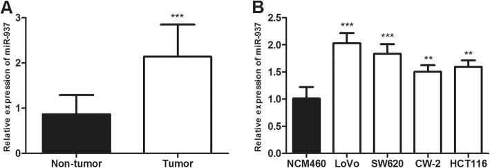 The miR-937 expression is detected in colon cancer tissues and cell lines via qRT-PCR analysis. a . miR-937 expression is increased in colon cancer tissues compared with adjacent normal tissues. b . miR-937 expression is upregulated in colon cancer cells (LoVo, SW620, CW-2, HCT116) compared with a normal colonic epithelial cell line (NCM460). ** P