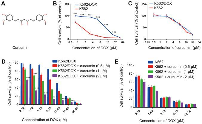 Curcumin enhances the cytotoxicity of in K562/DOX cells. (A) Chemical structure of curcumin. K562 and K562/DOX cells were treated with (B) DOX (0–50 µM) and (C) with curcumin (0–32 µM) for 48 h. (D) K562/DOX and (E) K562 cells were pre-treated with curcumin (0.5, 1 and 2 µM) for 24 h, followed by incubation with various concentrations of DOX for an additional 48 h. ***P