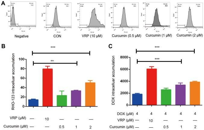 Curcumin increases intracellular accumulation of RHO-123 and DOX in K562/DOX cells. (A) Effects of VRP (10 µM) and curcumin (0.5, 1 or 2 µM) on intracellular accumulation of RHO-123 was detected by flow cytometry. 'FL-1H' means RHO-123 emitting light detection channel, x-axis means fluorescence signal was detected by FL-1H. (B) A quantification of the effect of VRP (10 µM) and curcumin (0.5, 1 or 2 µM) on intracellular accumulation of RHO-123. (C) Effects of VRP (10 Μm) and curcumin (0.5, 1 or 2 Μm) on intracellular accumulation of DOX. **P
