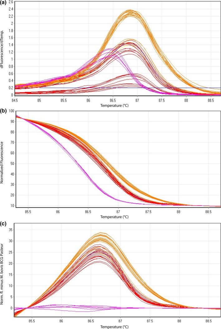 Representative high‐resolution melting graphs corresponding to one high‐resolution melting analysis of a subset of cultured samples ( n = 9) and clinical specimens ( n = 7) of HRM assay 3. Curves of tested samples previously identified as M. bovis BCG are shown in pink, cultured samples of M. bovis in red, and clinical specimen of M. bovis in orange. (a) Melting curves; (b) normalized plot; and (c) difference plot in relation to M. bovis BCG Pasteur ATCC 35734