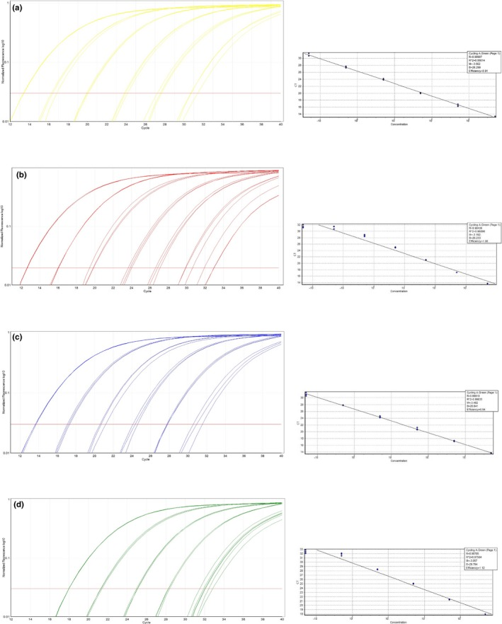 qPCR amplification curves and standard curves of the serial dilution using (a) M. tuberculosis H37Rv; (b) M. <t>bovis</t> <t>BCG</t> Pasteur ATCC 35734; (c) M. microti ATCC 19422; and (d) M. caprae ZH 22914 for high‐resolution melting (HRM) assay 2
