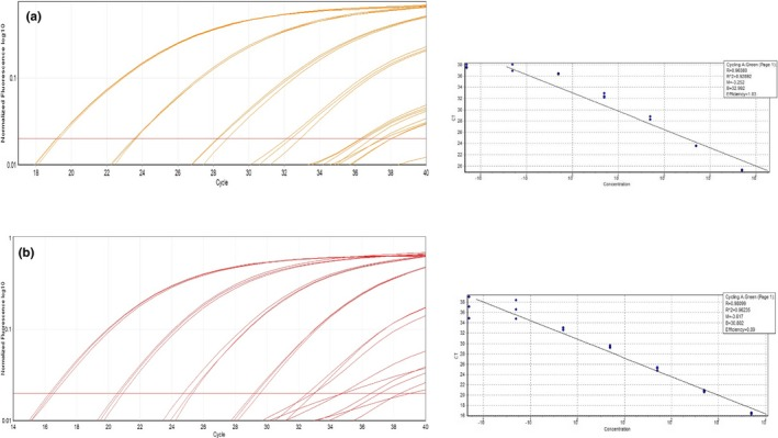 qPCR amplification curves and standard curves of the serial dilution using (a) M. bovis BCG Pasteur ATCC 35734 and (b) M. bovis for high‐resolution melting (HRM) assay 3