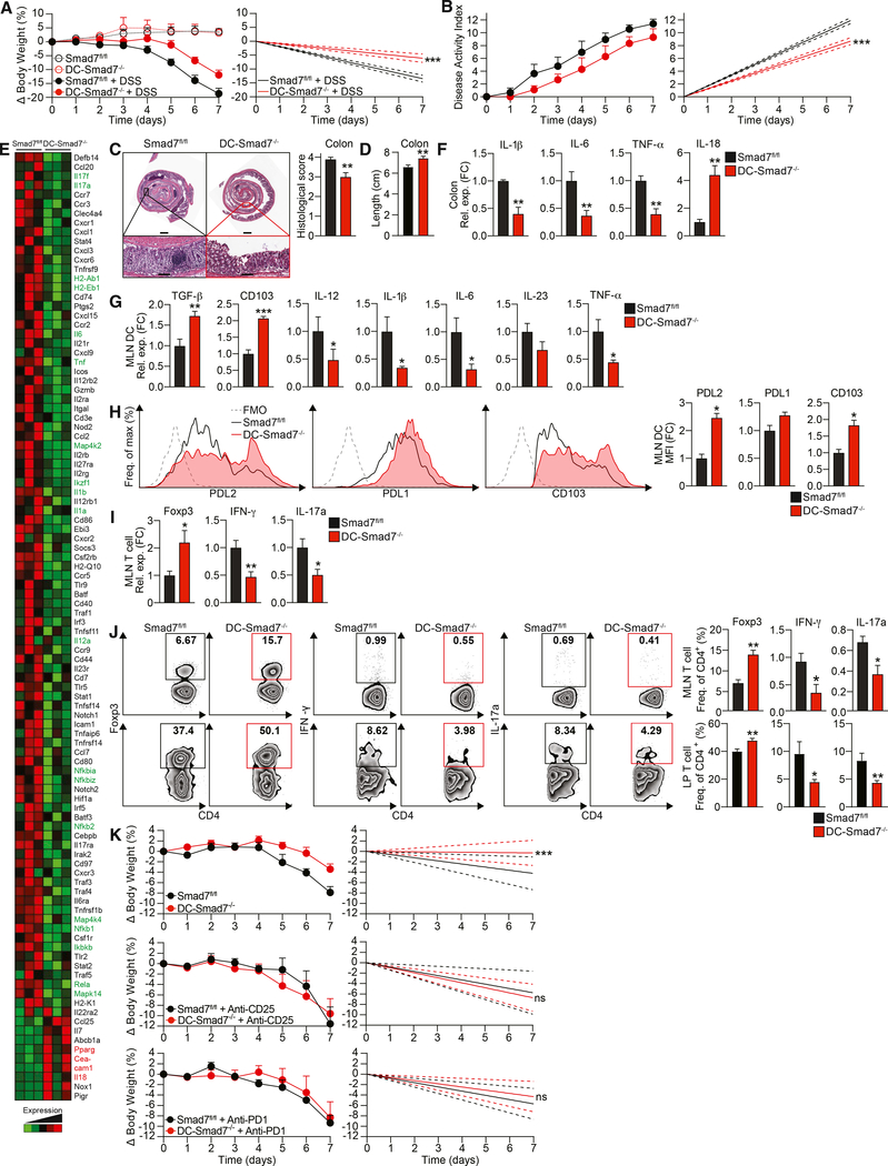 Smad7 Deficiency in DCs Protects Mice against DSS-Induced Colitis (A) Percentage body weight changes (left) and linear regression analysis (right) of Smad7 fl/fl and DC-Smad7 −/− mice treated with 3% DSS in drinking water for 7 days (n = 8). (B) Disease activity index, a composite of body weight loss, blood in stool, and consistency of stool (higher score corresponds to colitis severity) (left) and linear regression analysis (right) of Smad7 fl/fl and DC-Smad7 −/− mice treated with 3% DSS in drinking water for 7 days (n = 9). (C) Representative histological sections with H E (left) and scores (n = 10) (right) of colitic mice based on degree of ulceration at day 7, scored blinded by a pathologist at HRHCF. Scale bars represent ~1 mm (top) and ~100 μm (bottom). (D) Colon lengths of colitic mice at day 7 (n = 13). (E) Representative NanoString (immunology panel) heatmap of inflammatory and regulatory genes in distal colon from colitic Smad7 fl/fl and DC-Smad7 −/− mice. Important upregulated and downregulated genes of interest in DC-Smad7 −/− are highlighted in red and green, respectively. (F) qRT-PCR validation of selected genes, including IL-1β, IL-6, TNF-α, and IL-18 expression in these samples (n = 3). (G) qRT-PCR of TGF-β, CD103, IL-12, IL-1β, IL-6, IL-23, and TNF-α expression in MLN CD11c + DCs from colitic mice (n = 5). (H) Representative FACS histograms (left) and MFIs (right) of PDL2, PDL1, and CD103 in MLN CD11c + DCs from colitic mice (n = 3). MFI data reflective of CD11c + population and expressed as FC from Smad7 fl/fl condition. (I) qRT-PCR of Foxp3, IFN-γ, and IL-17a in MLN CD4 + T cells (n = 5). (J) Representative FACS plots (left) and frequencies (right) of Foxp3 + , IFN-γ + , and IL-17a + populations in MLN (top) and lamina propria (LP) (bottom) CD4 + T cells (n = 4–10). (K) Percentage of body weight scores (left) and linear regression analyses (right) of Smad7 fl/fl and DC-Smad7 −/− mice treated during DSS administration, as indicated. Mice were treat