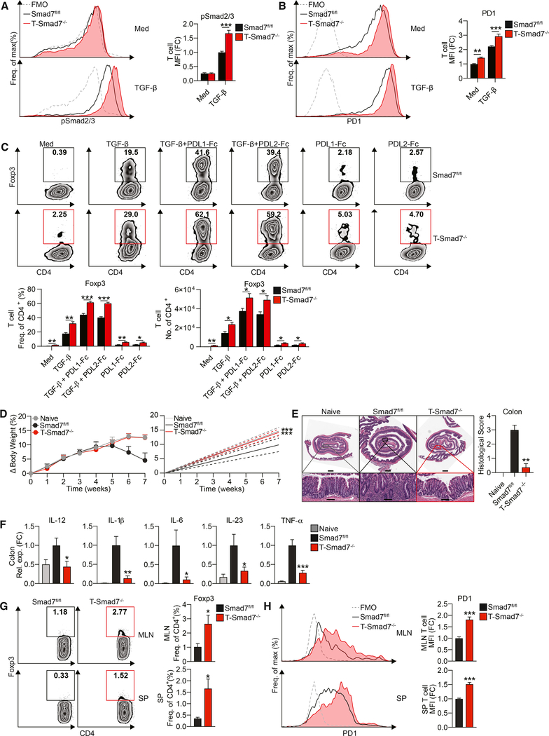 Smad7 Limits PD1 on CD4 + T Cells and PD1-Mediated Treg Differentiation and Promotes T Cell-Mediated Colitis (A) Representative FACS histograms (left) and MFIs (right) of phospho-Smad2/3 in naive CD4 + T cells from Smad7 fl/fl and T-Smad7 −/− mice stimulated with or without TGF-β (2.5 ng/mL), for 1 h (n = 4). (B) Representative FACS histograms (left) and MFIs (right) of PD1 in naive CD4 + T cells from these mice stimulated with low-dose plate-bound anti-CD3/CD28 (1 μg/mL) with or without TGF-β (2.5 ng/mL), for 18 h (n = 8). (C) Representative FACS plots (top), frequencies (bottom left), and cell counts per well (bottom right) of Foxp3 + populations in naive CD4 + T cells from these mice stimulated with or without TGF-β (0.5 ng/mL) and recombinant plate-bound PDL1-Fc or PDL2-Fc (30 μg/mL), for 4 days (n = 5). (D–H) Colitis was induced by adoptive transfer of 6 × 10 5 CD4 + CD45RB hi T cells i.p. into Rag-1 mice, followed by monitoring for 7 weeks. (D) Percentage body weight changes (left) and linear regression analysis (right) of Rag-1 −/− mice injected with CD4 + CD45RB hi T cells from Smad7 fl/fl or T-Smad7 −/− mice (n = 8). (E) Representative histological sections stained with H E of distal colons (left) and histological scores (n = 8) (right) from recipient Rag-1 −/− mice, based on the degree of epithelial damage, as scored blinded by a pathologist at HRHCF. Scale bars represent ~1 mm (top) and ~100 μm (bottom). (F) qRT-PCR of IL-12, IL-1β, IL-6, IL-23, and TNF-α in colitic tissue from recipient mice (n = 8). (G) Representative FACS plots (left) and frequencies (right) of Foxp3 + populations in MLN (top) and splenic (bottom) CD4 + T cells from recipient mice at 7 weeks (n = 5–8). (H) Representative FACS histograms (left) and frequencies (right) of PD1 in MLN (top) and splenic (bottom) CD4 + T cells from recipient mice at 1 week (n = 6). Data representative of ≥2 independent experiments. qRT-PCR and MFI (reflective of CD4 + population) data expressed as FC from Sm