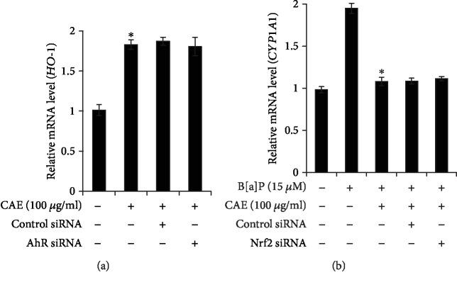 CAE-induced activation of NRF2/HO1 pathway was not linked with AHR activation. (a, b) HaCaT cells were transfected with control siRNA, AhR siRNA, or NrF2 siRNA using the DharmaFECT® Duo transfection reagent. After 24 h, the cells were incubated with CAE (100 μ g/ml) in the presence of B[a]P for 24 h and then subjected to real-time PCR analysis for <t>HO-1</t> and CYP1A1 . ∗ p