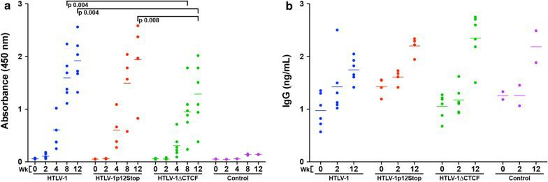 Ablation of HTLV-1 CTCF-binding site significantly decreases HTLV-1-specific antibody response, but not total rabbit IgG. a Antibody response was quantified using a modified Avioq HTLV-1/2 Microelisa System protocol (Avioq, Inc., Research Triangle Park, NC). The supplied horseradish peroxidase (HRP) conjugated goat anti-human immunoglobulin (Ig) was substituted for an HRP conjugated goat anti-rabbit IgG (ab6721; Abcam, Cambridge, United Kingdom). Rabbit plasma was diluted 1:500 to obtain absorbance values within the linear range of the assay. Each symbol represents the absorbance value of a single inoculated rabbit at 0, 2, 4, 8, or 12 weeks post-infection within each group. b Total rabbit IgG was quantified using the Abcam Rabbit IgG ELISA Kit in accordance with the provided protocol (ab187400; Abcam, Cambridge, United Kingdom). Plasma samples were diluted 1:1 × 10 6 . Each symbol represents total IgG of a single inoculated rabbit at 0, 2, or 12 weeks post-infection within each group. Bars represent mean absorbance or IgG values. Mixed model analyses with a Bonferroni correction were performed in weeks 8 and 12 (HTLV-1-specific) or 2 and 12 (total rabbit IgG) to determine statistical significance. A p