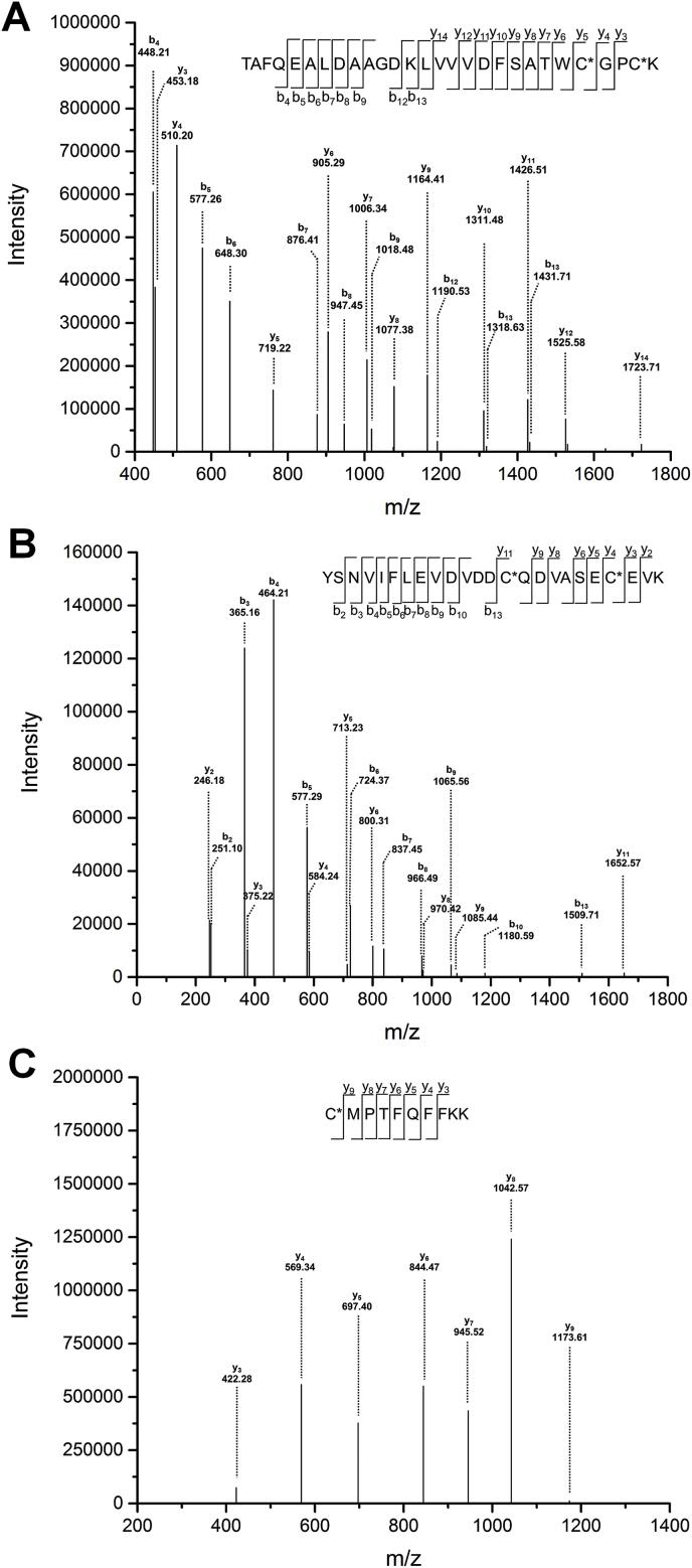 Identification of BQ-modified Cys residues in Trx1. DTT-reduced Trx1 (10 μM) was incubated with BQ (50 μM) for 5 min in 50 mM Tris-HCl containing 2 mM EDTA (pH 7.6). The BQ-treated Trx1 was then digested using Lys-C at 37 °C overnight and analysed by LC-MS/MS (seen Materials and methods for further details). (A) Peptide 1, (B) Peptide 2, (C) Peptide 3 (cf. Table 1 ).