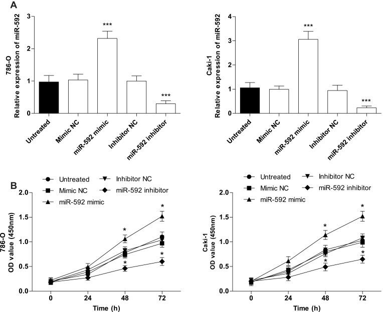 Effects of miR-592 on the proliferation of 786-O and Caki-1 cells. Differences were analyzed using one-way ANOVA followed by Tukey's post-hoc test. ( A ). miR-592 mimics, miR-592 inhibitors or NCs were transfected into 786-O and Caki-1 cells, and transfection efficiency was measured using qRT-PCR. ( B ). Cell proliferation was measured by CCK-8 assays. * P