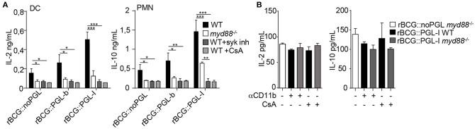 rBCG::PGL-I preferentially triggers <t>Syk/calcineurin/NFATc</t> through CR3 to rewire innate cells (A) DCs or PMNs from WT or myd88 −/− mice were infected with the three rBCG strains at MOI of 5. WT cells were treated with GS-9973 to inhibit the Syk pathway, or CsA to block NFATc translocation 1 h before infection. After overnight incubation supernatants were harvested to measure by ELISA IL-2 produced by DCs and IL-10 produced by PMNs. (B) Before infection of DCs or PMNs with rBCG::noPGL or rBCG::PGL-I as in (A) , cells were either incubated for 1 h with anti-CD11b antibody M1/70 to block CR3-mediated entry, or exposed to CsA to block NFATc translocation as indicated. IL-2 produced by DCs and IL-10 by PMNs after overnight incubation were measured by ELISA. Data are presented as mean ± SEM ( n = 4). * P