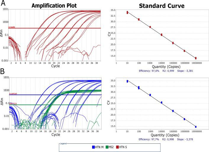 Comparison between amplification efficiencies of hantavirus RT-qPCR in singleplex and multiplex with MS2 EIC formats. Amplification plot and Standard Curve for each assay format are depicted. Threshold was fixed where the amplification efficiency was higher, inside the exponential phase of each amplification plot in logarithmic scale, with 0.3481 ΔRn in singleplex (A) and 0.4492 ΔRn in multiplex (B). Ct variation between singleplex and multiplex was within 1 Ct. Standard curves were constructed with seven 1:10 dilutions ranging from 10 7 copies to 10 1 copies of in vitro RNA. Amplification efficiency was 97.6% for singleplex (R 2 :0.999) (A) and 97.7% for multiplex (R 2 :0.998) (B). Ct: Cycle threshold, HTN M: hantavirus RT-qPCR multiplex format, HTN S: hantavirus RT-qPCR singleplex format.