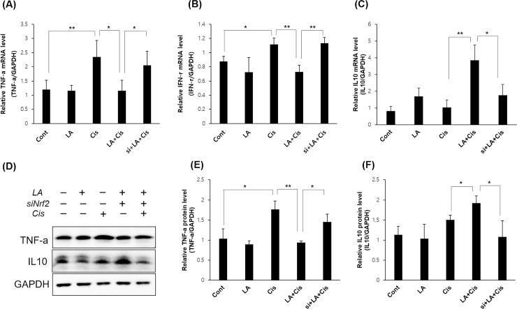 The effects of α-lipoic acid (LA) on of inflammatory cytokines. With 0.5 mM LA pretreatment, the mRNA levels of proinflammatory cytokines tumor necrosis factor-α (A) and interferon-γ (B) were decreased, and the level of IL-10 (C), an anti-inflammatory cytokine, was increased significantly in HEI-OC1 cells, but this action of LA was offset by NRF2 inhibition. The results of western blots of TNF alpha and IL10 were also similar to the results of PCR (D-F). The data represent the means ± SD of three independent experiments. * P