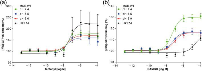 Dependence of [ 35 S]‐GTPγS binding on pH and H297 6.52 . (a) Fentanyl‐ and (b) DAMGO‐induced [ 35 S]‐GTPγS binding to MOR‐WT and in MOR‐H297 6.52 A. Data represent mean ± SEM of specific [ 35 S]‐GTPγS binding in % of baseline with non‐linear fit. n = 6 per curve. Derived parameters are shown in Table 2 . (a) No significant differences were found; (b) significant differences ( P