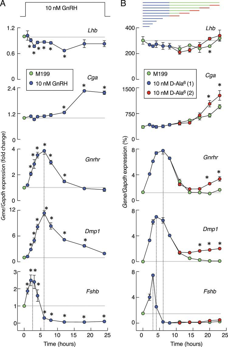 Time-course of GnRH receptor agonists on gonadotropin subunit genes, Gnrhr , and Dmp1 expression in cultured pituitary cells. ( A ) Effects of continuous GnRH application on gene expression. Note the transient nature of Fshb , Gnrhr , and Dmp1 expression, a slow and continuous upregulation in Cga expression, and a transient and minor inhibition of Lhb expression during GnRH treatment. Data shown are mean ± SEM values, normalized to the zero time point controls, from three to nine independent experiments per time point, each performed in quadruplicate. Asterisks indicate significant differences vs. zero time point. ( B ) A gene-specific patterns of expression in response to application of D-Ala6. Top panel indicates duration of first (blue) and second (red) 10 nM D-Ala6 application and washout periods (green). The data shown are mean ± SEM values from a representative experiment; when not visible, SEM values were within circles. Asterisks indicate a significant difference between pairs. In both panels, horizontal gray lines indicate basal gene expression and vertical dotted lines indicate times needed to reach the peak in expression. If not otherwise specified, in this and following figures experiments were performed with cells from postpubertal female rats. Immediately after dispersion, cells (1.5 million per well) were seeded in 24-well plates and cultured overnight in horse serum-containing GnRH-free medium. After 20 h incubation, medium was replaced with fresh 0.1% BSA-containing medium with GnRH or D-Ala6.