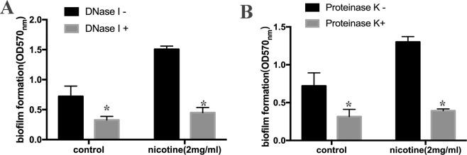 DNase I and Proteinase K inhibit nicotine-induced biofilm formation. The biofilm formation of S. aureus USA300 strain was detected using a <t>microtiter</t> plate assay by measuring crystal violet stained biofilm at OD570. DNase I (25 U/well) and Proteinase K (2 ug/ml) was added to the well in both 2 mg/ml nicotine treatment group and control group. ( A ) Treated by DNaseI, the average thickness of biofilms varied from 1.506 ± 0.04 to 0.450 ± 0.07 in the nicotine-treated group (n = 3) and from 0.720 ± 0.14 to 0.328 ± 0.05 in untreated group. (n = 3) ( B ) Proteinase K(2 ug/ml) disrupted biofilm formation, in the nicotine treated group decreasing from 1.300 ± 0.06 to 0.393 ± 0.02 (n = 3), and in the control group decreasing from 0.721 ± 0.14 to 0.316 ± 0.08 (n = 3). *P