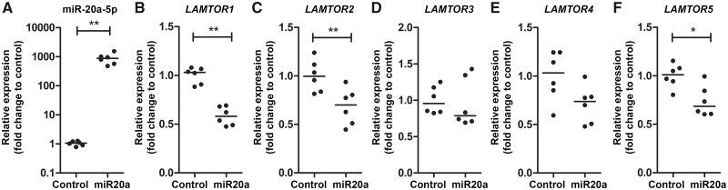 Relative expression of LAMTOR genes after transfection with <t>miRNA-20a-5p</t> mimic in foetal astrocytes. TaqMan TM PCR of miRNA-20a-5p ( A ) and RT-qPCR of LAMTOR1 ( B ), LAMTOR2 ( C ), LAMTOR3 ( D ), LAMTOR4 ( E ) and LAMTOR5 ( F ) in foetal astrocytes <t>transfected</t> with miRNA-20a-5p mimic (miR20a) for 24h ( n = 3 biological triplets and two technical duplicates). Data are normalized to Lipofectamine® (control). * P